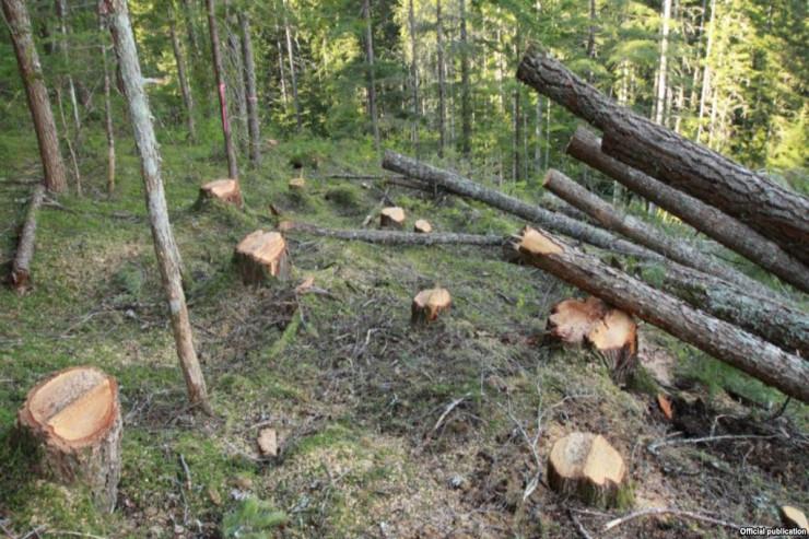 Lerikdə ağacların kəsilməsi ilə bağlı cinayət işi açılıb.