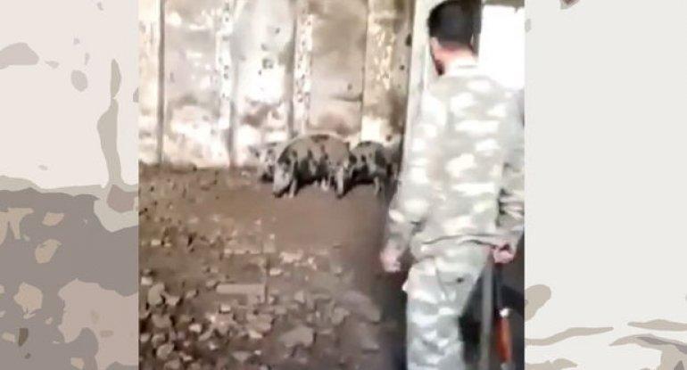 Ermənilər Zəngilanda məscidi donuz fermasına çeviriblər - VİDEO