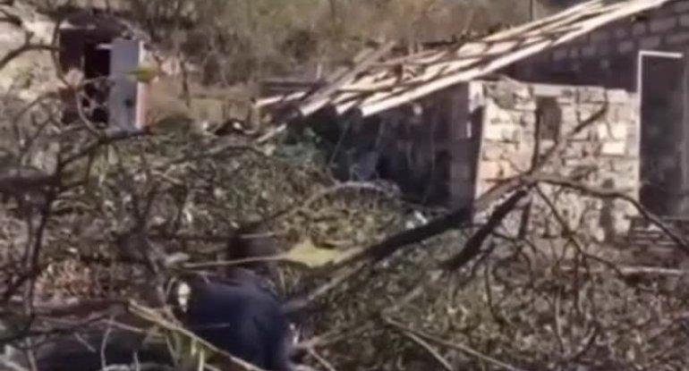 Ermənistan Kəlbəcərdə ekoloji terroru davam etdirir