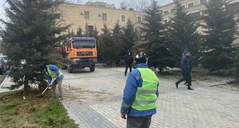 Bakının daha bir ərazisində ağaclar köçürülür: Obyekt tikilir? - FOTO