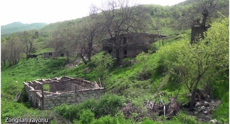 Zəngilanın Nəcəflər kəndi - VİDEO