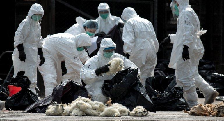 Çində daha bir qrip virusu insana yoluxub