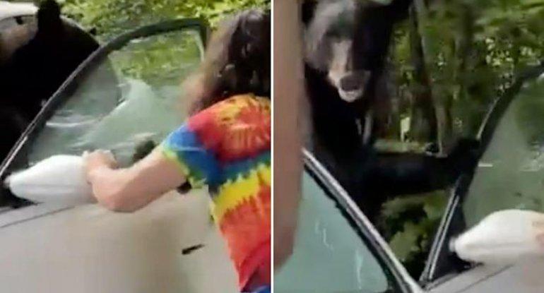 ABŞ-da kuryoz hadisə: gənc oğlanın maşınından ayı düşdü - VİDEO