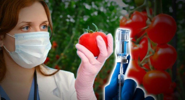 Özbəkistan koronavirusa qarşı pomidor peyvəndi hazırladı